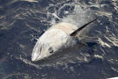pesca-in-mare-palinuro-26